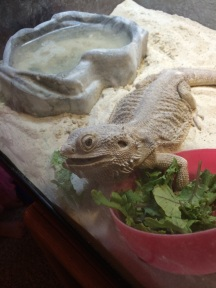 Give the beast her kale and no one gets hurt-