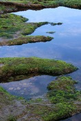 Otter Crest tide pool