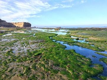 Eelgrass dressed tide pool at dawn