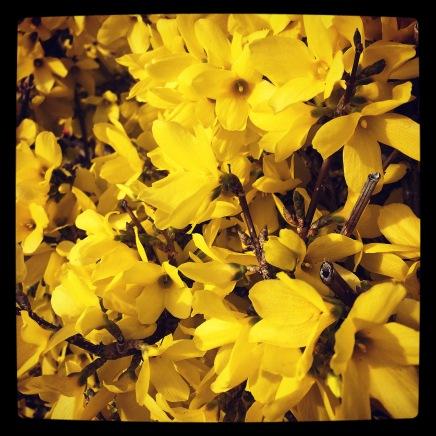 First Blush of Spring